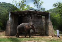 Kaavan being sent to Cambodia, govt tells court